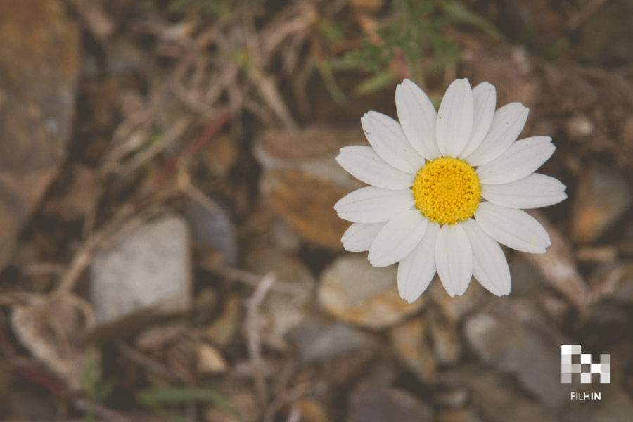 Responsabilidad Social Corporativa | FILHIN