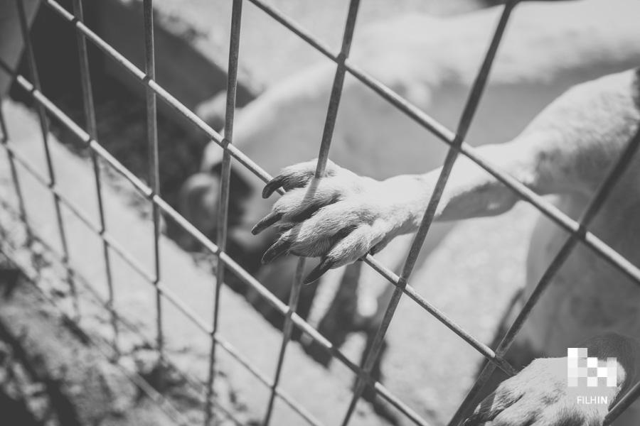 23F: Día de los perros mal llamados peligrosos